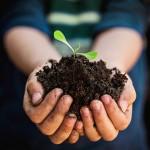 Грунты и удобрения для растений